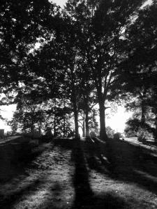 cemetery-sun